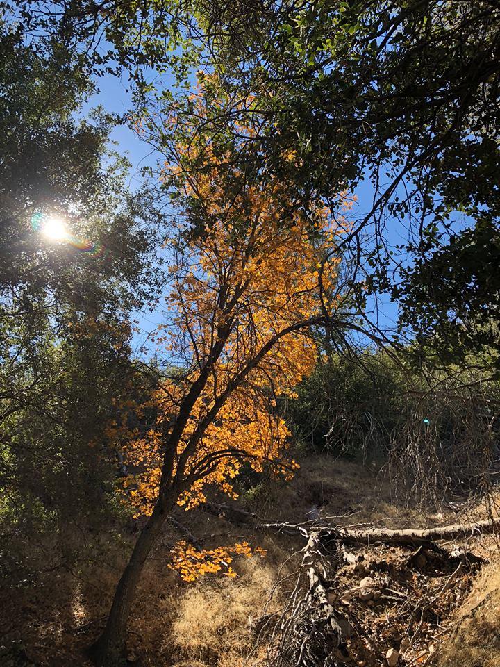 Oak-Tree-Sun.jpg